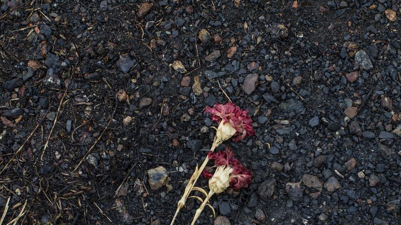 Blumen an der Absturzstelle von Malaysia Airlines-Flug MH17 in der Nähe des Dorfes Hrabove  in der Region Donezk