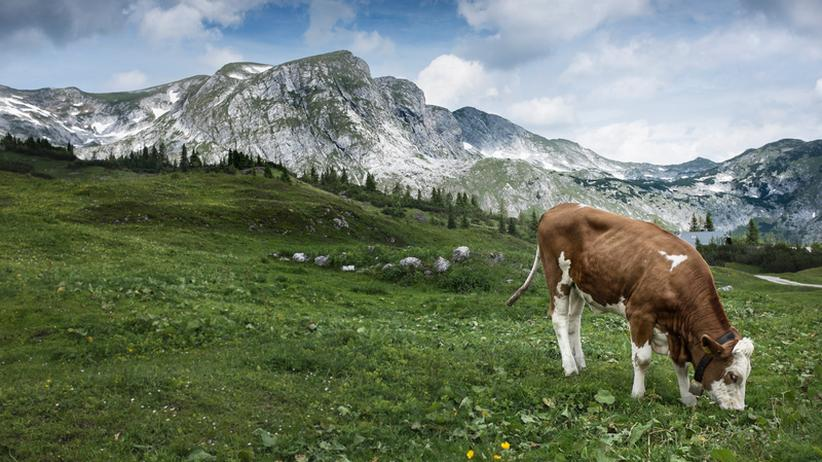 Tourismus: 2025: Odyssee des Alpenraumes