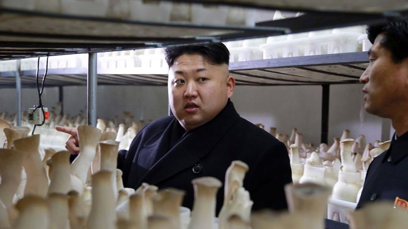 Propaganda: Nordkorea, Land der sprießenden Pilze