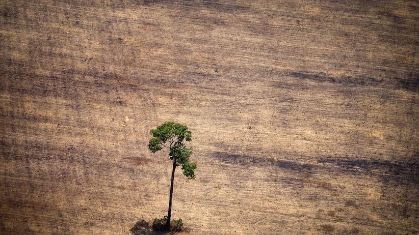 Klimaschutz Brasilien Deutschland