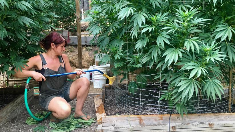 Drogenpolitik: Weitere US-Staaten legalisieren Cannabis