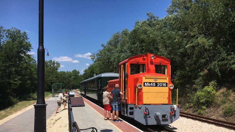 Der Zug, der in Felcsut vom Stadion in den Wald fährt.