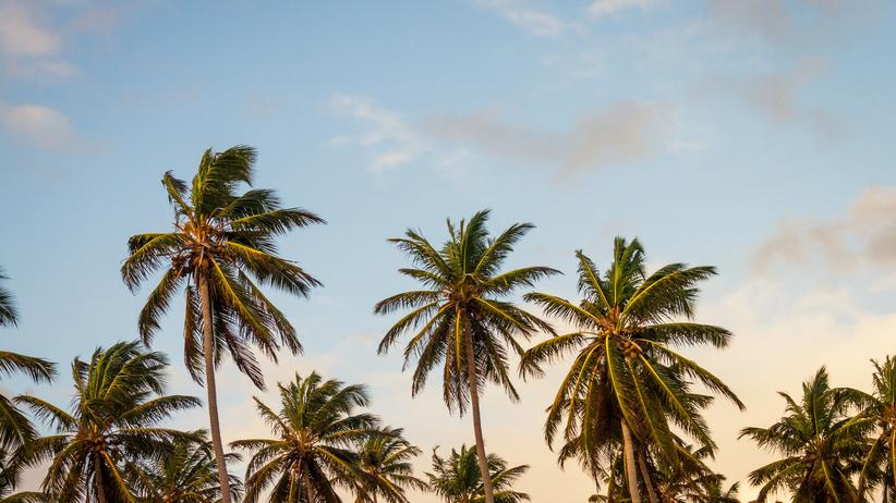 Steuerflucht: Notfalls allein gegen das Paradies