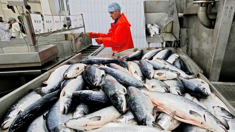 Fischfang: Moratorium soll Fische in der Arktis schützen