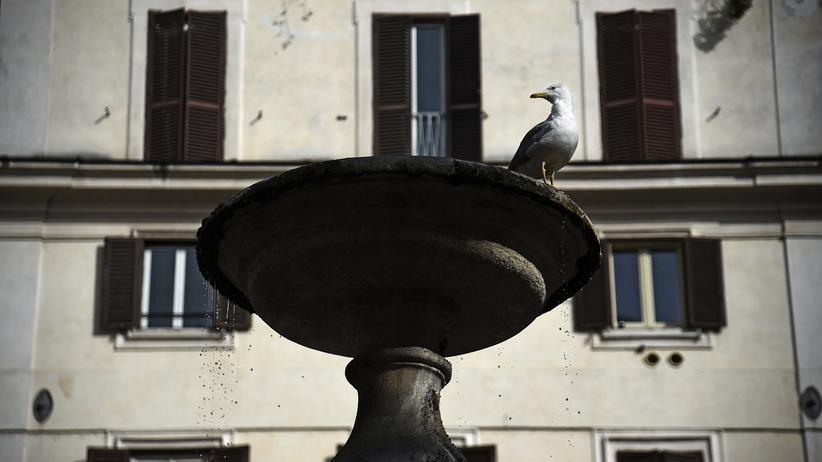 Eurokirse: Eine Möwe auf der Piazza Santa Maria Dei Monti in Rom