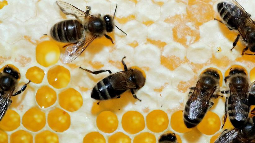 Insektenvernichtungsmittel: Neonikotinoide schaden Bienen und Hummeln – und können diese sogar töten.