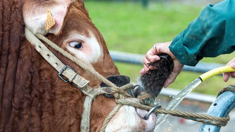 EU-Agrar-Atlas: Wofür Europas Bauern Geld bekommen