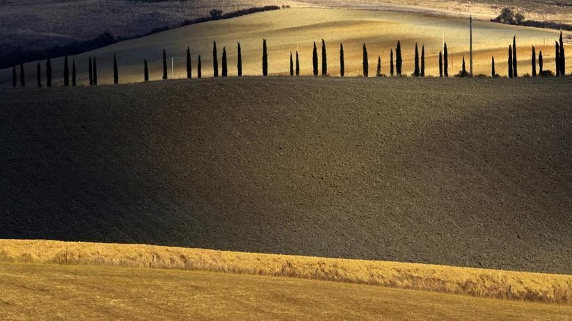 Europawahl: Felder nahe Asciano, südlich von Siena in der Toskana