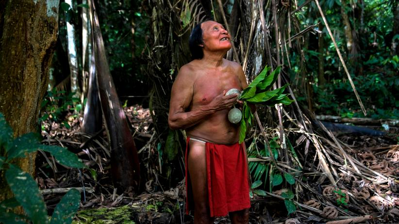 Abholzung des Amazonas: Mission Kettensäge