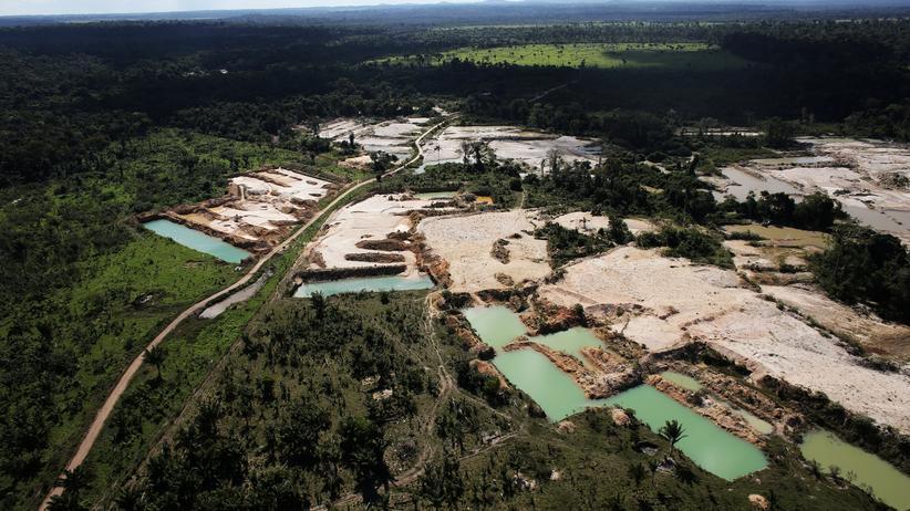 Regenwald: Jede Minute verschwinden drei Fußballfelder Urwald
