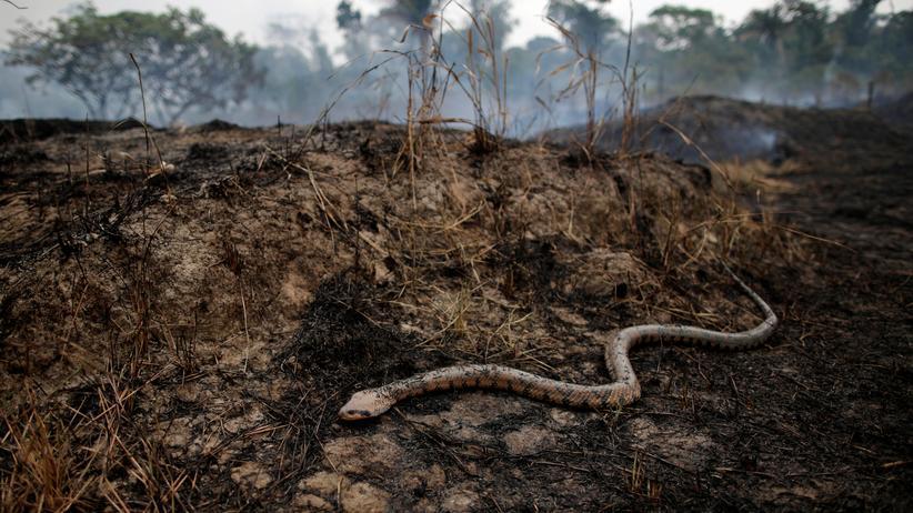 Amazonas-Regenwald: Zu lange ignoriert