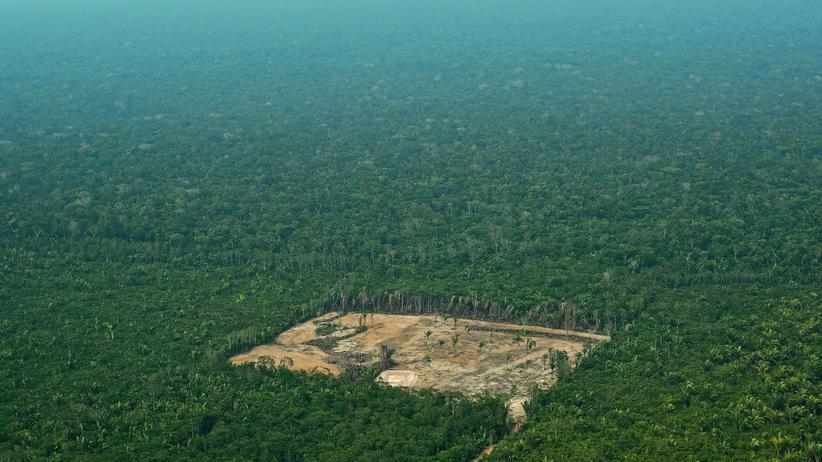 Brasilien: Gerodete Fläche im Amazonas-Regenwald: Das Ökosystem ist wichtig für das Weltklima und leidet massiv unter Abholzung zu Gunsten landwirtschaftlicher Nutzflächen.