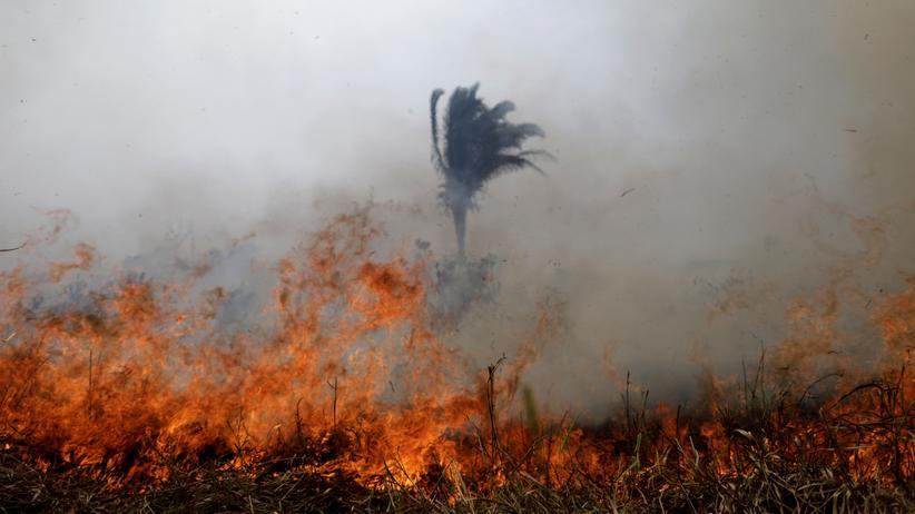 Amazonaswaldbrände: Brasiliens Gouverneure stellen sich gegen Präsidenten