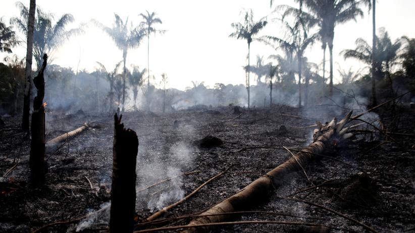 Amazonasgebiet: Von Landwirten abgebranntes Land in Iranduba, Brasilien