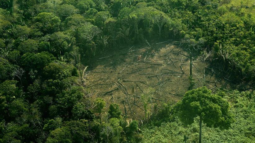 Amazonas: Bolsonaro will keine Gelder für Amazonasschutz