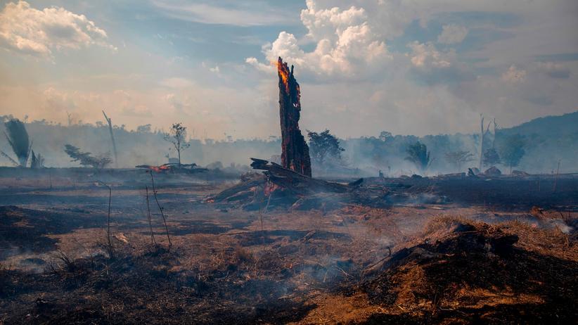 Umweltpolitik: Verbrannter Regenwald in Altamira im Bundesstaat Pará im Norden Brasiliens