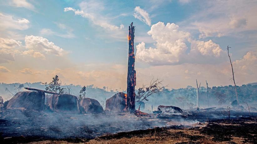 Waldbrände: Jair Bolsonaro will Brandrodung für zwei Monate verbieten