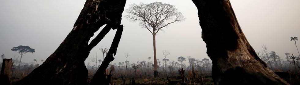 Waldbrände Brasilien Thema