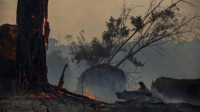 Brasilien: Mehr Waldbrände trotz Verbots von Brandrodungen