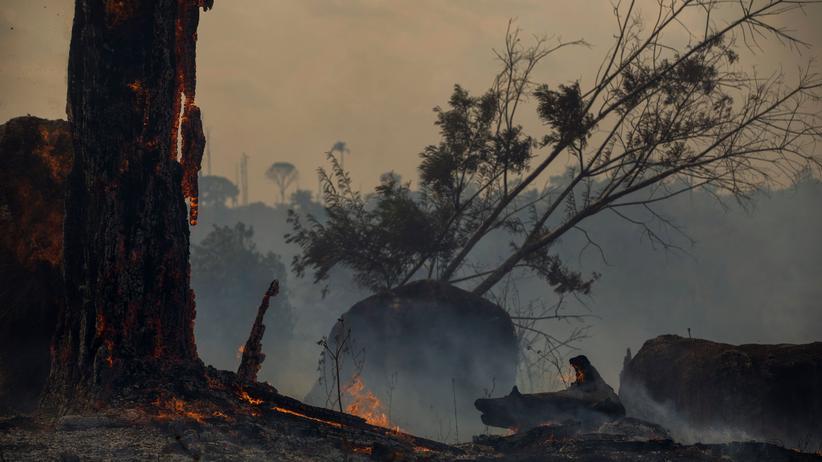 Amazonas: Im Amazonaswald haben zeitweise mehr als 100.000 einzelne Brandherde gewütet.