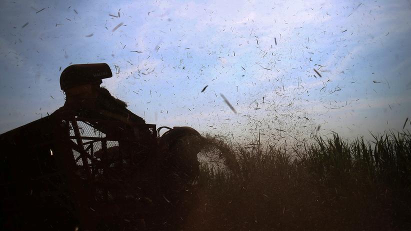 Jair Bolsonaro: Zuckerrohrernte in Brasilien