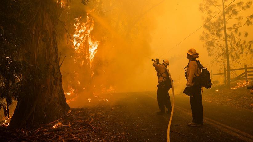 Kalifornien: Feuerwehrkräfte in einem Waldstück nahe des kalifornischen Healdsburg. Inzwischen sind bis zu 70 Prozent der Brände dort eingedämmt.