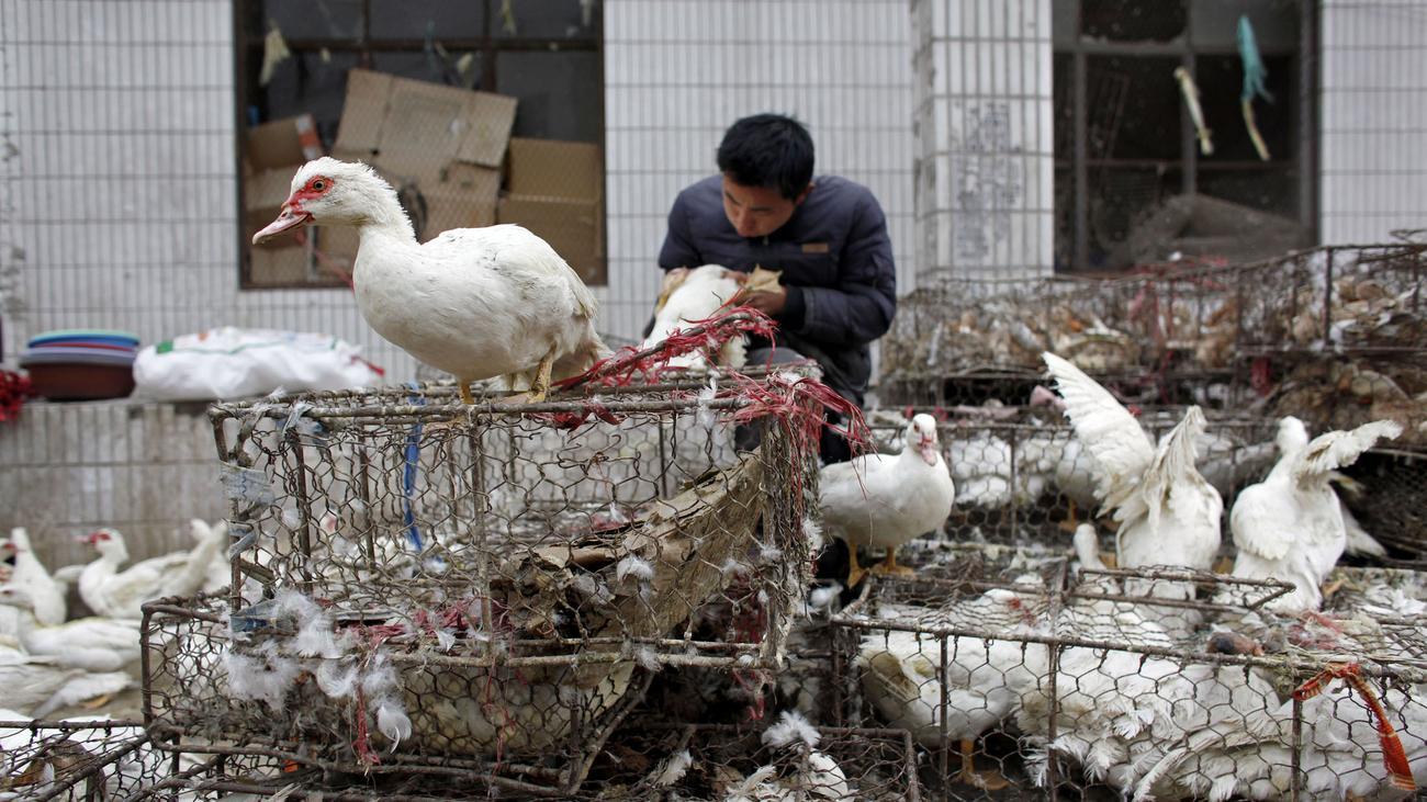 China verbietet Verkauf von lebendem Geflügel auf Märkten