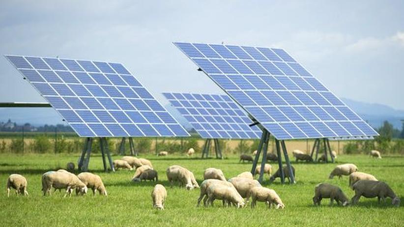 Erneuerbare Energien: FDP will Ökostromförderung kürzen