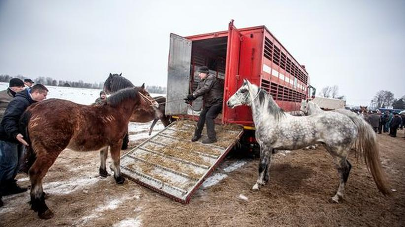 Bund und Länder: Auf einem Pferdemarkt in Polen (Archiv)