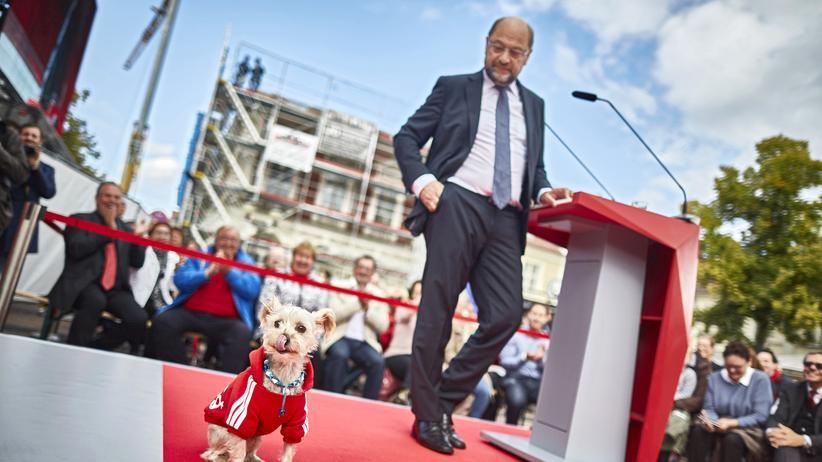 Martin Schulz: Überraschender Besuch bei einem Wahlkampfauftritt in Potsdam