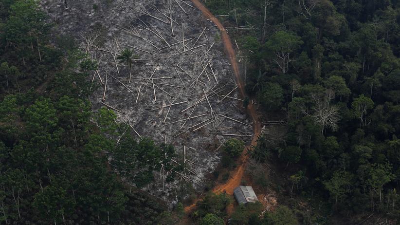 Brasilien: Umweltministerium stoppt Zahlungen zum Regenwaldschutz