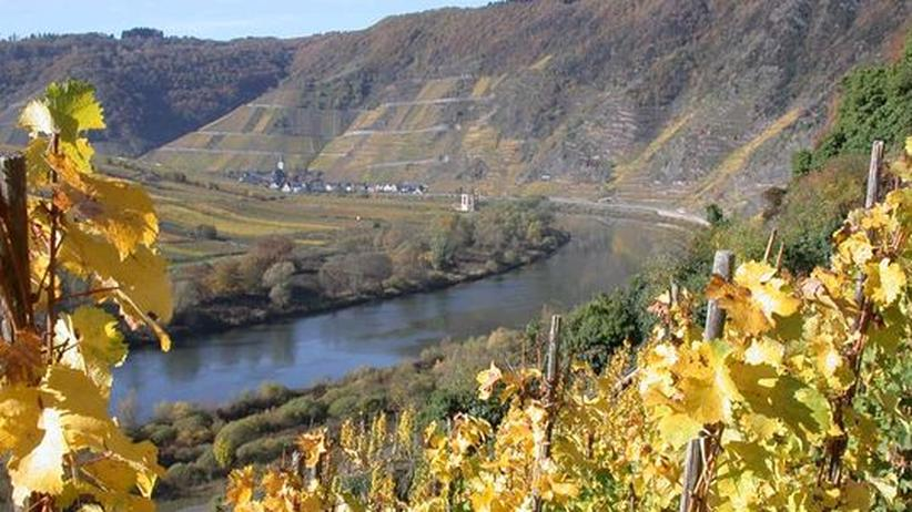 Weinnebenstraße: Weinterrassen an der Mosel