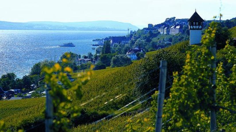 Bodensee: Mit der Badehose in den Weinberg
