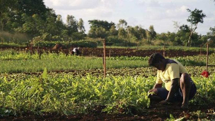 Ein Bauer auf seinem Acker bei Terre Rouge