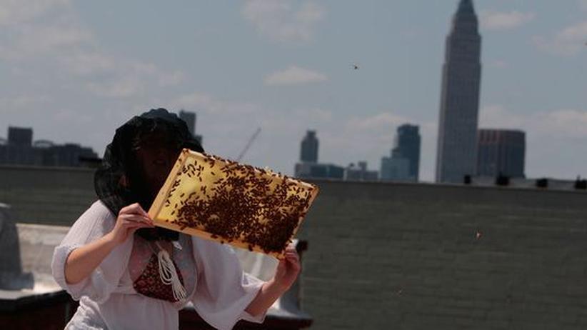 Eine Imkerin betrachtet auf dem Dach ihres Hauses eine Bienenwabe