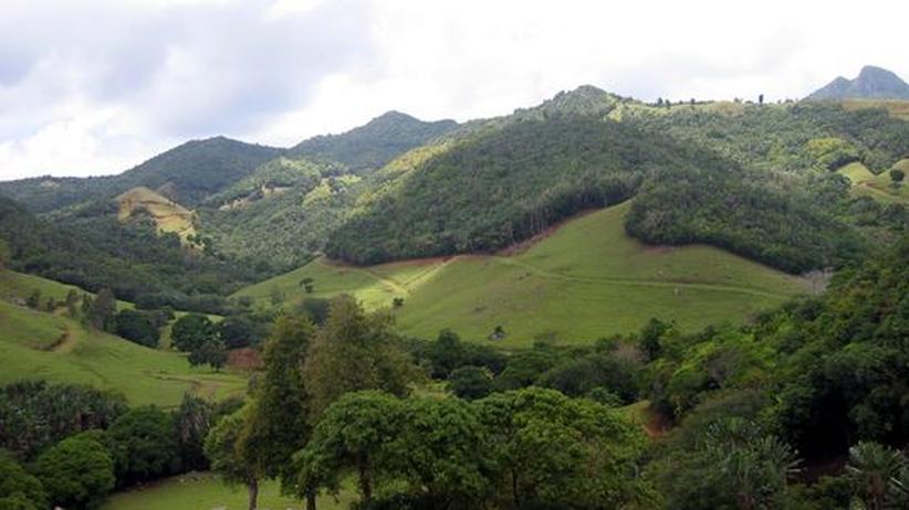 Das Naturschutzgebiet Ferney Valley gehört zu den letzten natürlichen Waldgebieten der Insel