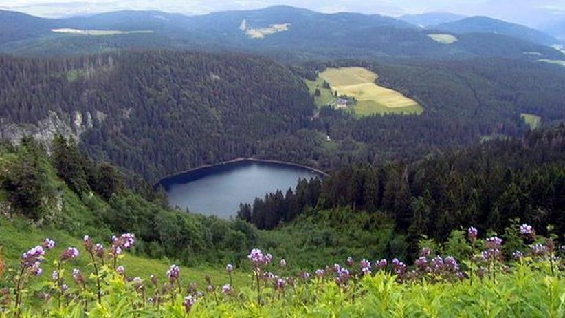 Schwarzwald: Auf Tour mit dem Feldberg-Ranger