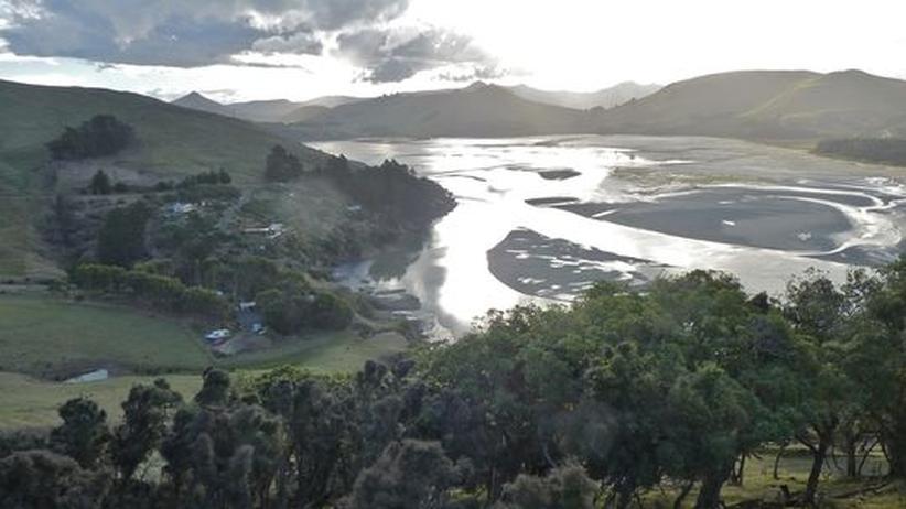Neuseeland Twitter: Neuseeland: Ein Schäfer Für Die Großschnäbel