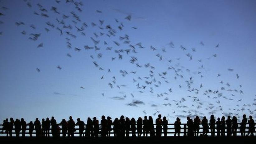 Texas: Alle Mäuse fliegen hoch