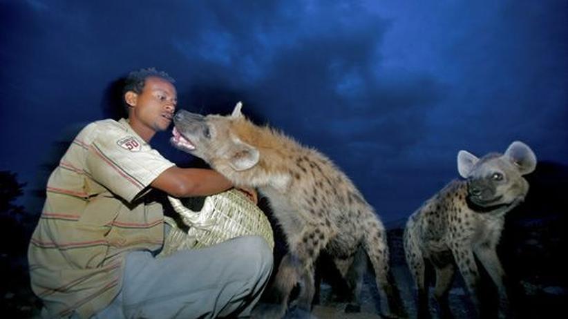 Die will nur spielen: Nach Einbruch der Dämmerung füttern Einheimische die Raubtiere aus einem Korb mit Fleischabfällen