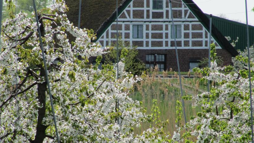 Radtour: Zur Apfelblüte ins Alte Land