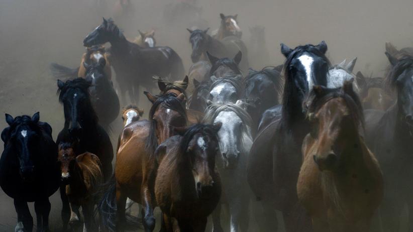 Pferde-Festival in Spanien: Zu Tal, zu Boden