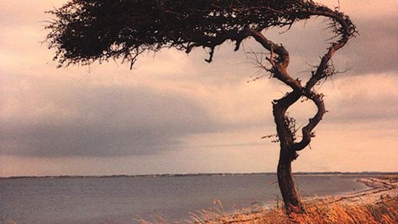 Dänemark : Ein Baum von einem Kerl