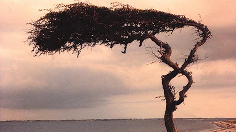Dänemark : Die Insel des einsamen Baumes