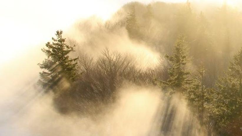 Wussten Sie, dass...: Ohne Wald kein Weihnachtsbaum
