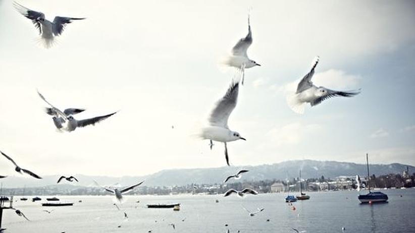 City Guide Zürich: Wasserspiele