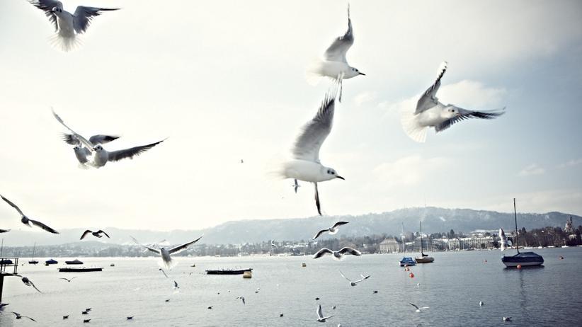 City Guide Zürich: Wasserspiele, fast wie am Meer