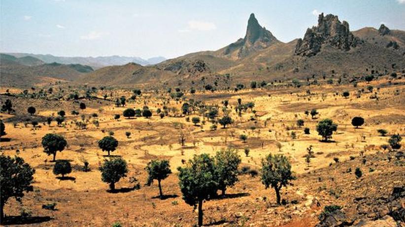 Kamerun: Das schöne Geld!