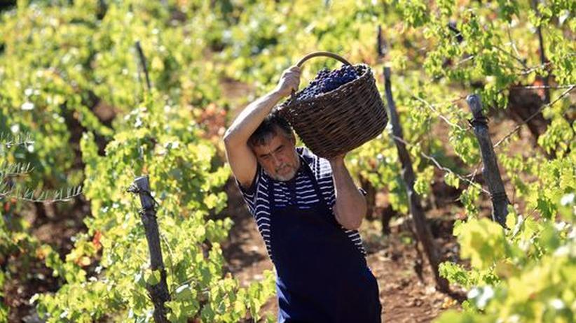 Wussten Sie, dass...: Der Chardonnay-König von Dalmatien