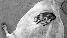 Fotograf Pentti Sammallahti: Der Mensch zu Gast bei Tieren